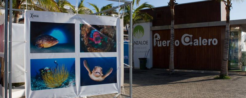 EXPOSICIÓN OPEN FOTOSUB MAR DE LAVA EN PUERTO CALERO